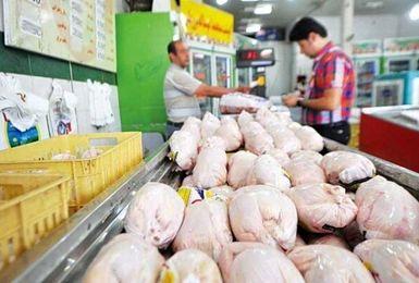 مرغ دوباره گران می شود/ قیمت مرغ در روزهای آینده چقدر می شود؟