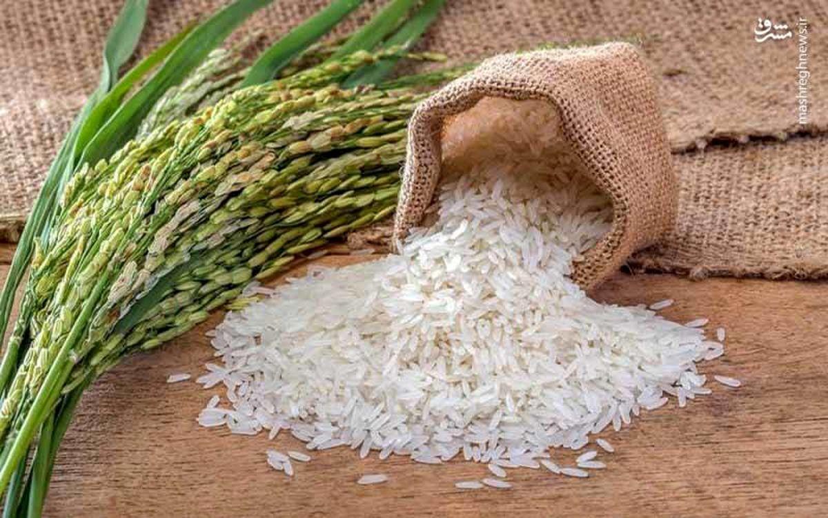 قیمت برنج روزهای پایانی تابستان چقدر شد؟